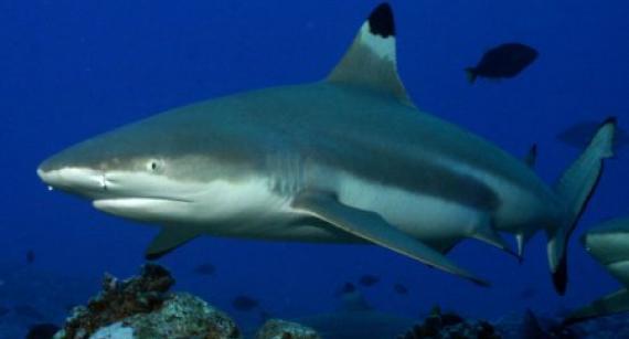 Мужчина 25 лет жил с зубом акулы в ноге и не знал об этом