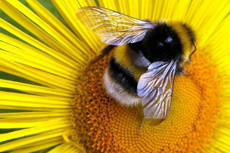 Пчелиный праздник