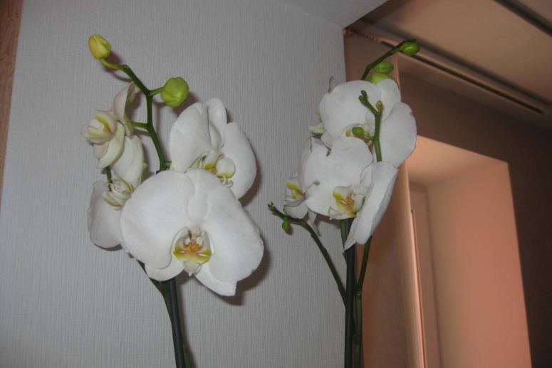 Комнатные растения в осенне-зимний период. Как ухаживать за комнатными цветами зимой