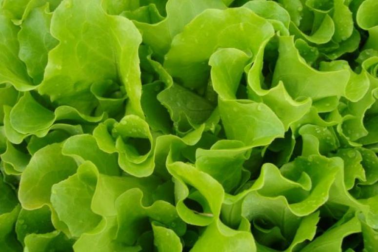 Маска из листьев салата для освежения кожи