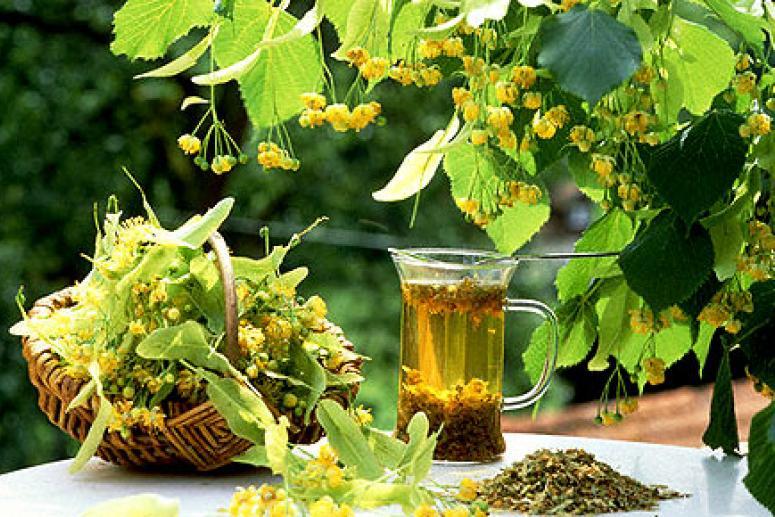 Как правильно приготовить травяной настой