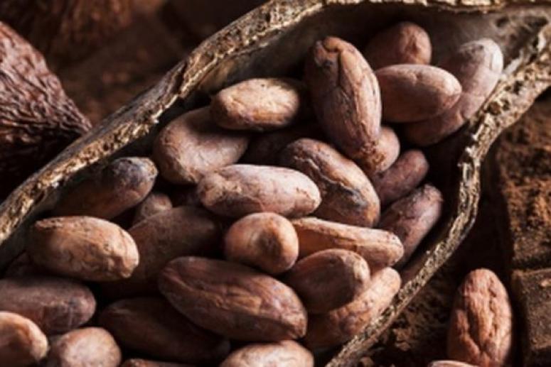 В какао обнаружены вещества, обращающие вспять резистентность к инсулину при ожирении