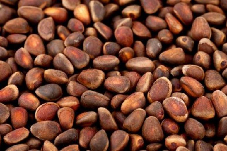 Учёные заявили о пользе скорлупы кедрового ореха