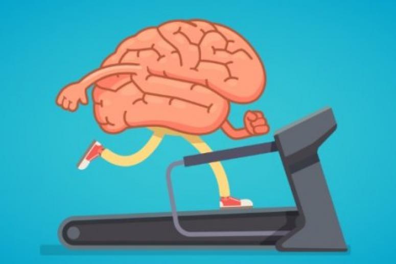 Омолодить мозг можно с помощью новой информации