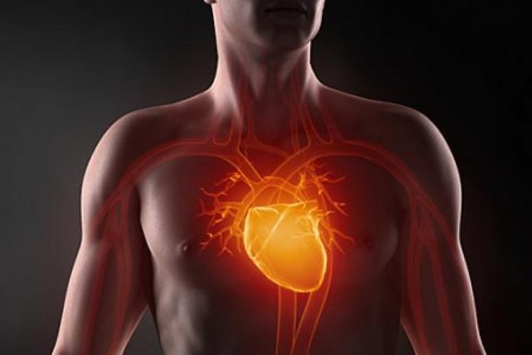 Сибирские ученые создали сердце-насос