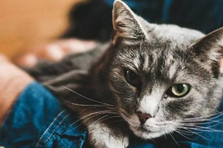 Врач: для здоровья нервной системы полезно слушать кошачье мурлыканье