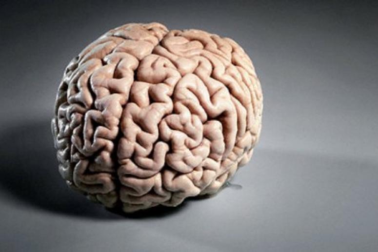 Ученые рассказали, какие продукты действительно полезны для мозга