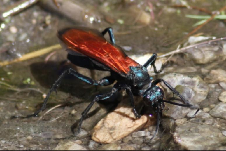Супер-злодей: названо самое опасное насекомое на планете