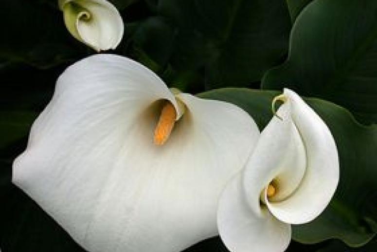 Букеты белых цветов