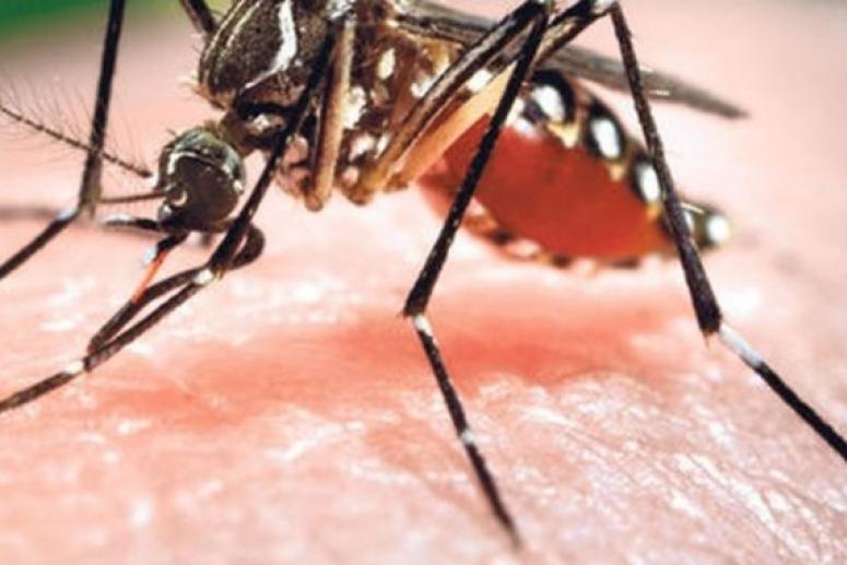 Ученый-энтомолог объяснил, как комары находят своих жертв для нападения