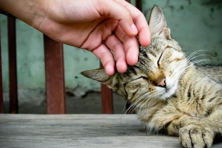 Любить на расстоянии. Почему чрезмерное общение с кошкой может быть опасно