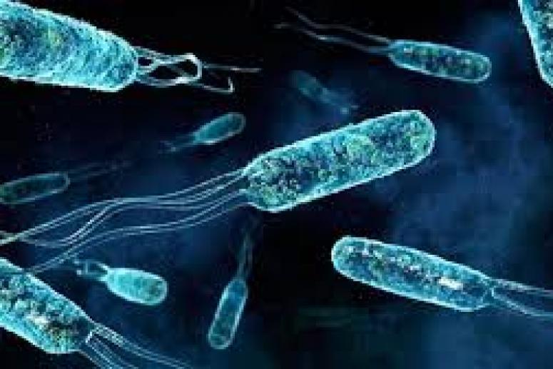 Какие клетки в организме человека вступают в борьбу с вирусом