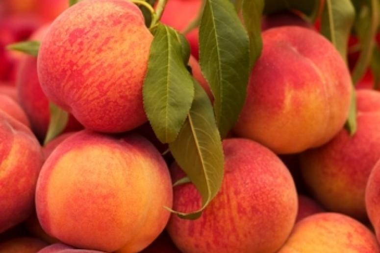 Персик против абрикоса. Какой из фруктов более полезен?