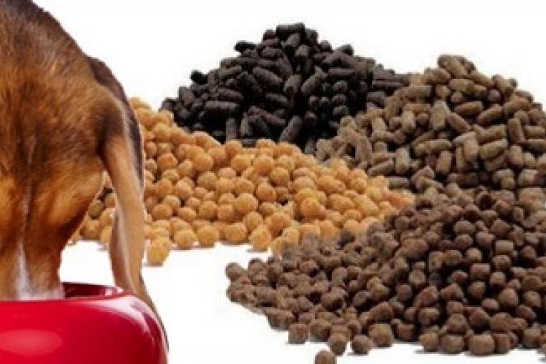Виды кормов для собак